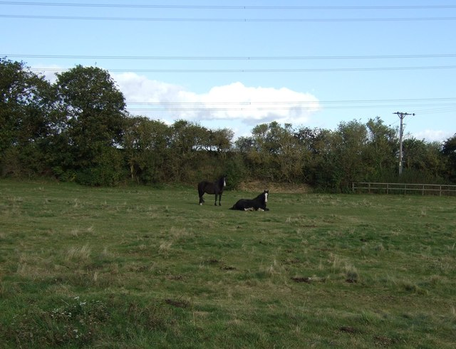 Grazing north of Uffington