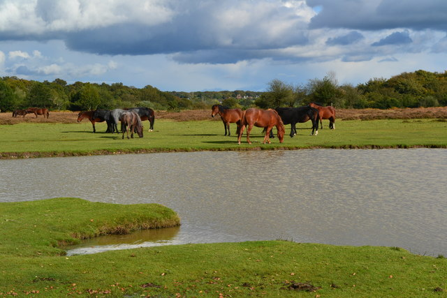 Ponies grazing at Green Pond