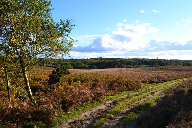 View towards Woodford Bottom from edge of Hasley Inclosure