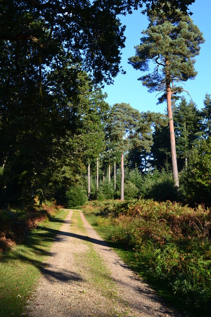 Track in Sloden Inclosure