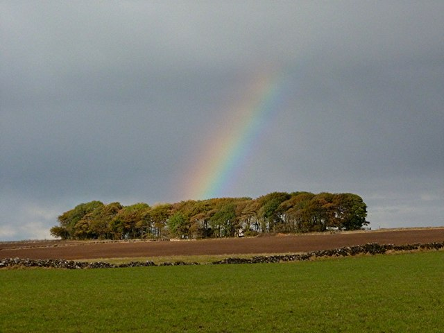 A crock of gold in the copse?