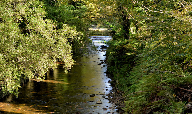 The Glen River, Dunmurry (4)