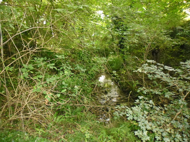 Source of the River Rother