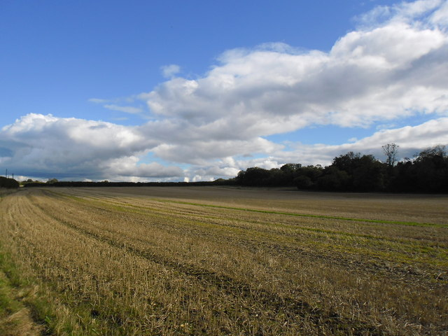 Field at Charity Farm