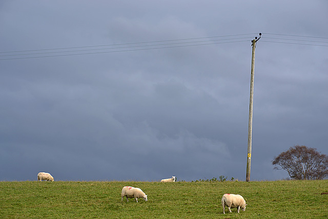 Sheep on the hill