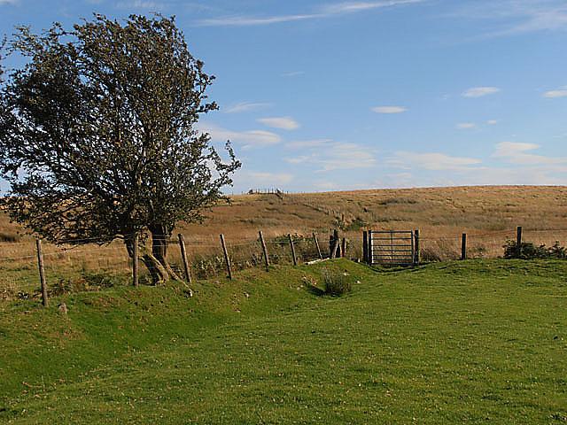 Gateway to a bog