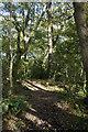 SW4425 : Bridlepath through Trevelloe Woods by Elizabeth Scott