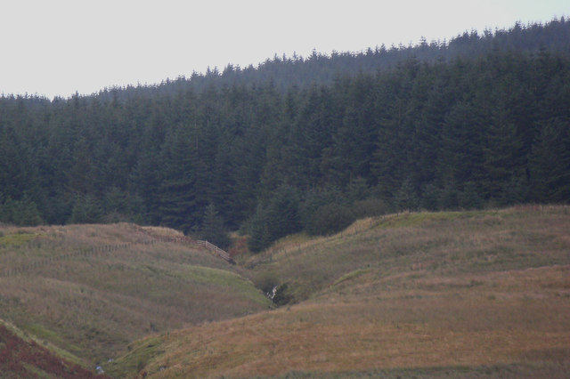 Wells Burn leaving forest on Muckle Hill