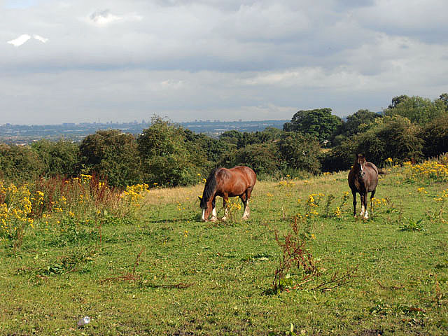 Horses grazing at Sedgley