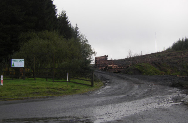 Forestry road, Burncleuch Hill