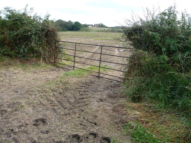 Field gate on the south side of Pipey Lane