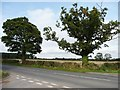 SK1625 : Contrasting trees along the B5017 by Christine Johnstone