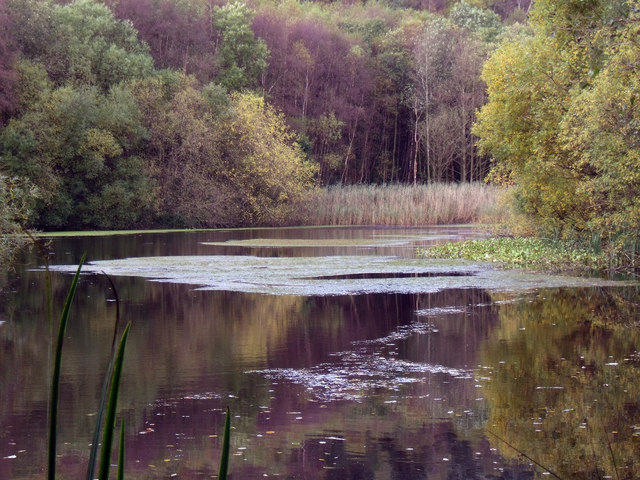 Swallows Wood Pool