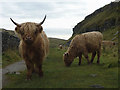 SD8964 : Highland cattle in Watlowes by Karl and Ali