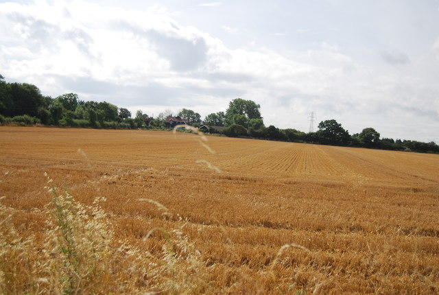 Wheat field, Canewdon Rd