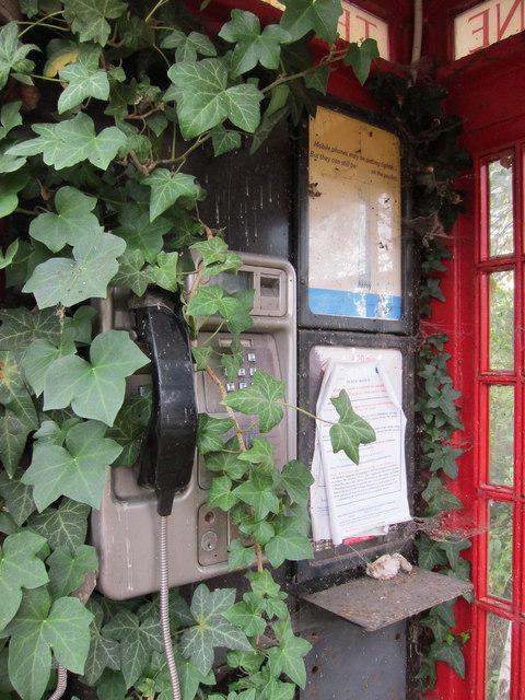Overgrown public telephone