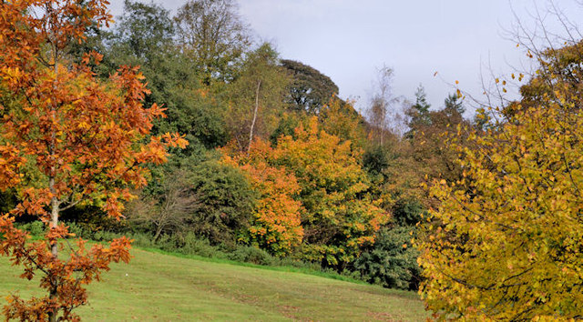 Autumn trees, Belfast