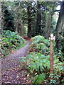 SP9128 : Woodland Path by Philip Jeffrey