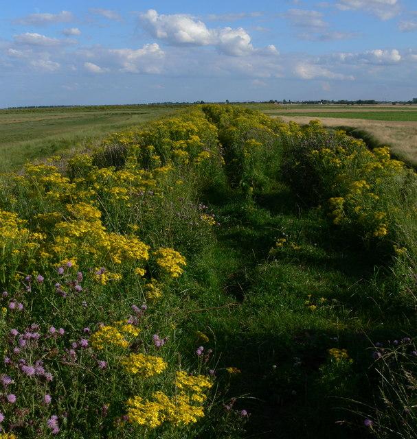 Overgrown path on the sea bank