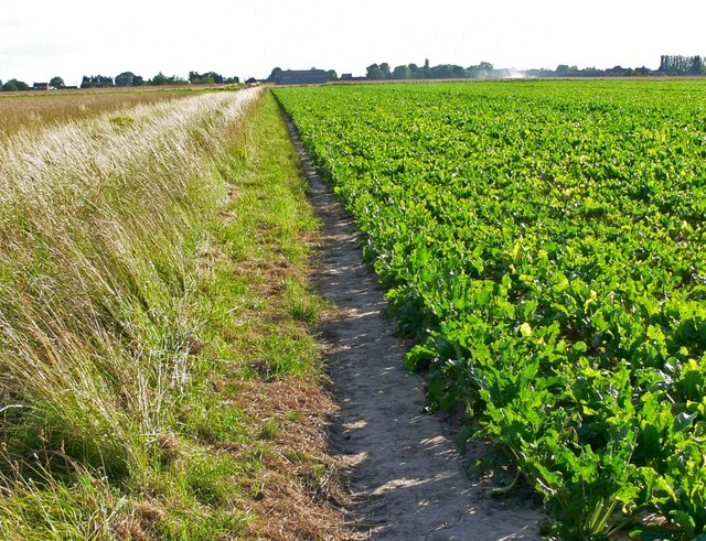 Path across the farmland to Gedney Drove End