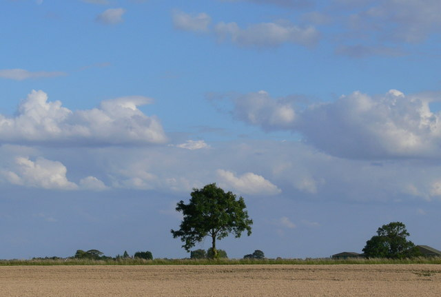 Trees and farmland near Gedney Drove End