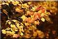 NT4914 : Autumn leaves in Wilton Lodge Park, Hawick by Walter Baxter