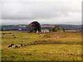 NY9072 : Haughton Pasture by David Dixon