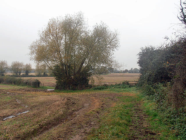 The Severn Way near Clifton