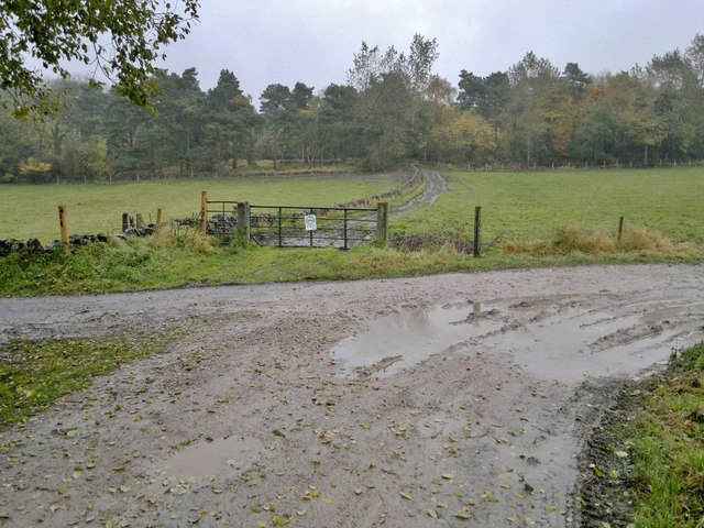Muddy tracks!