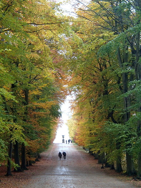 Avenue of beech trees, Chatsworth