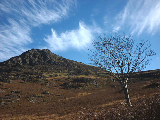 A tree below Harter Fell