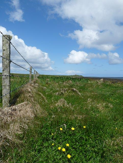 Fenceline, Egilsay, Orkney