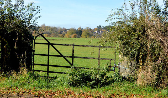 Field gate, Hilden/Lambeg