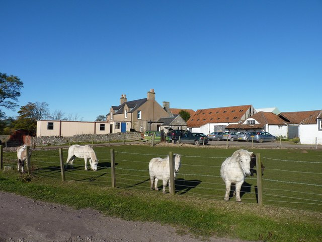 Ponies at Comerton farm