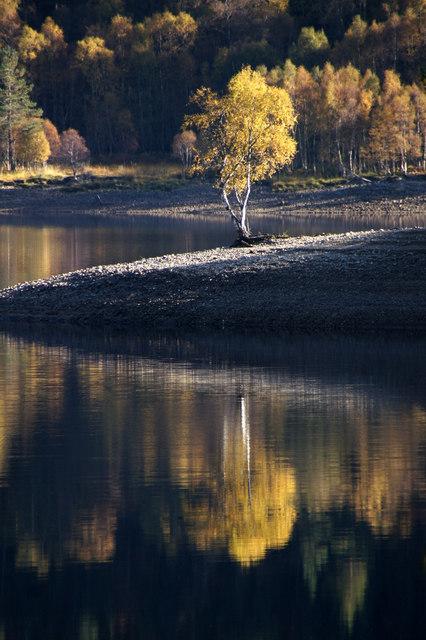 Lone birch tree beside Loch Beinn a' Mheadhoin, Glen Affric