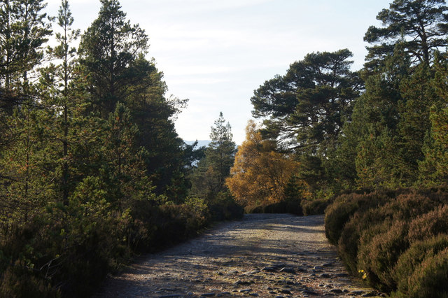 Track on the south side of Loch Affric