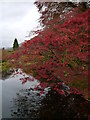 NS1485 : Pondside Autumn Colour, Benmore Botanic Gardens by James T M Towill