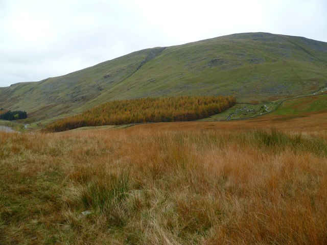 Orange Grass under Harter Fell