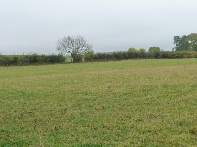 Field boundary with a bridleway alongside