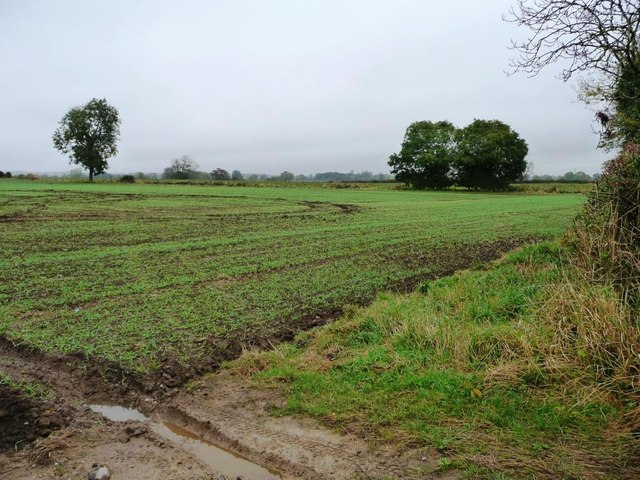 Corner of an arable field