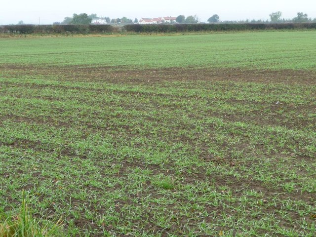 Arable field with footpath along the hedgerow