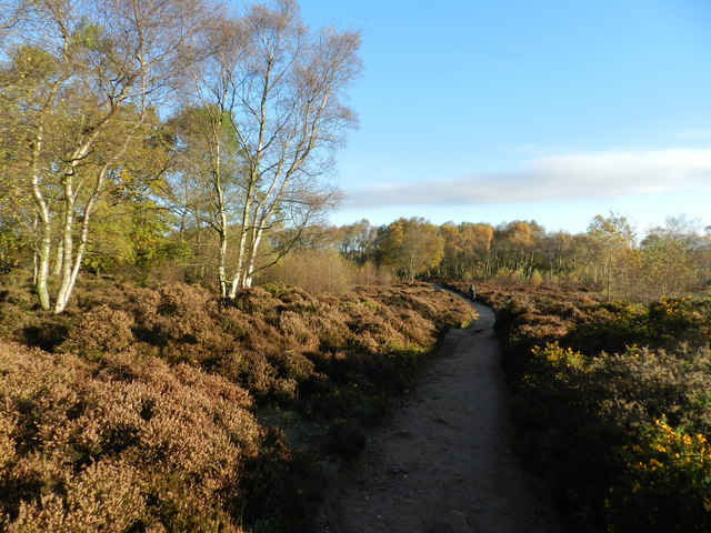 Heather and Silver Birch, Stanton Moor
