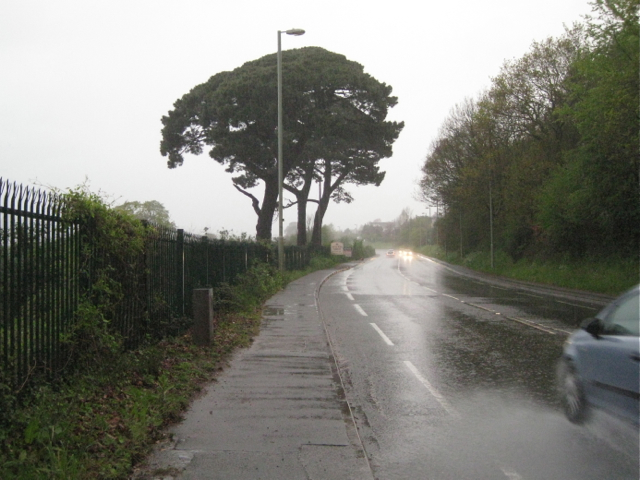 Monterey Pines by the A380 Torquay Road, Aller