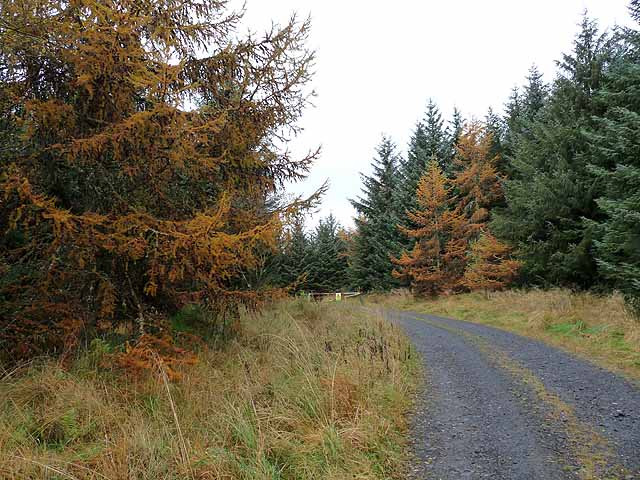 Forest road near Middleburn Farm
