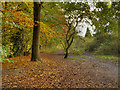 SJ8691 : Path to Heaton Mersey Common by David Dixon