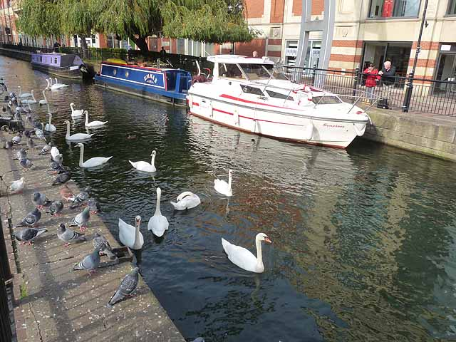 Boats, swans and pigeons by the Waterside