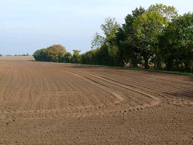 Ploughed field off Brinkle Spring Lane