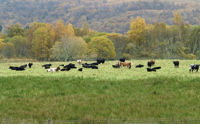 Field with cattle below B846