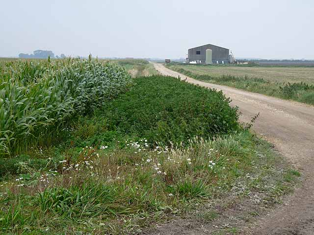 Farm track and building on Nocton Fen