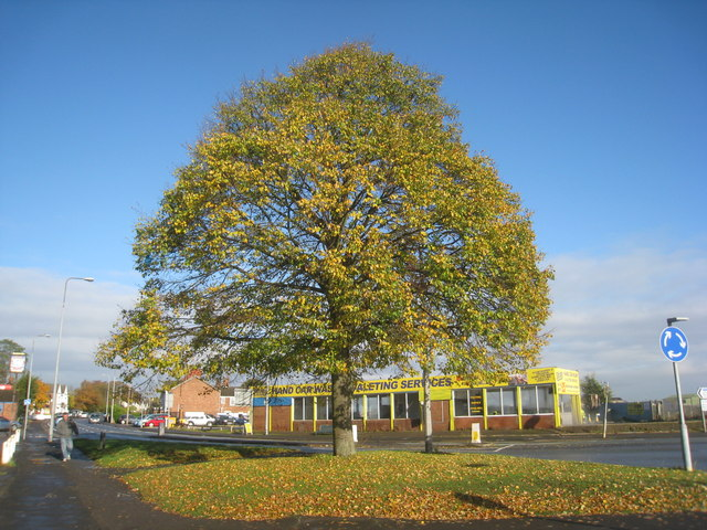 Normanby Road in autumn